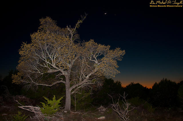 Moon and Venus over Budding Tree